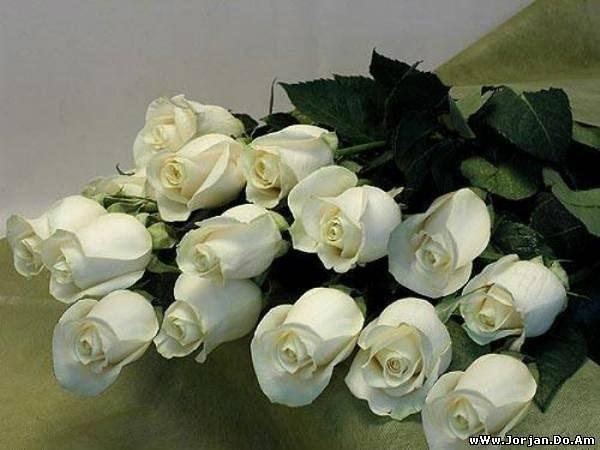 Розы красивый букет фото